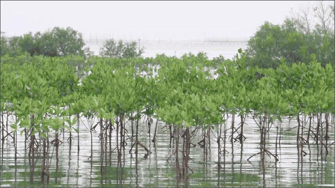 mangrove_resilienceheader